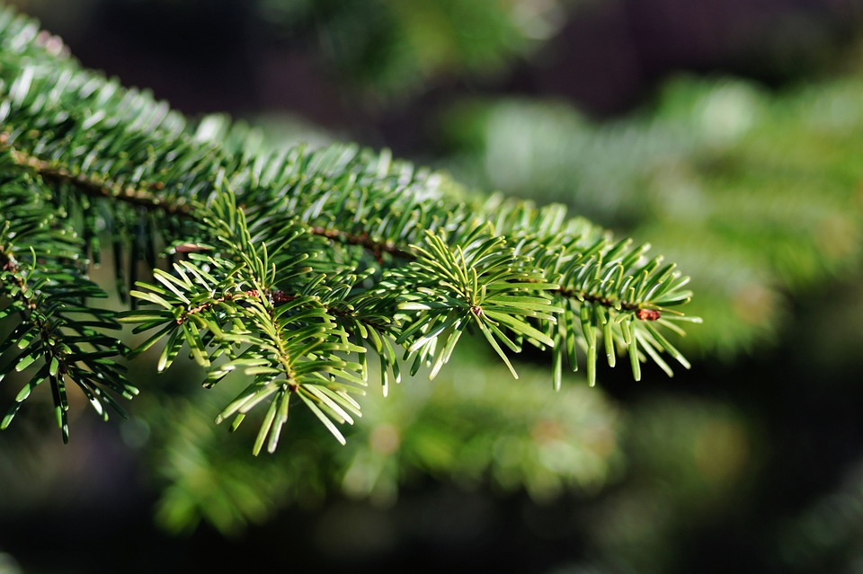 christmas-tree-579685_960_720